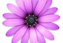 TextMate 2.0.19(文本编辑器)for Mac破解版